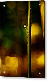 Acrylic Print featuring the photograph A New Beginning by Darryl Dalton