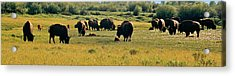 A New Beginning Grand Teton National Park Acrylic Print by Ed  Riche