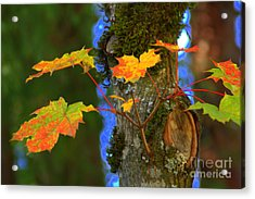 A New Branch Acrylic Print