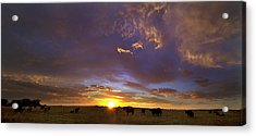 A New Dawn  Acrylic Print by Steven Reed
