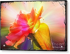 Acrylic Print featuring the photograph A New Day by Lori Mellen-Pagliaro