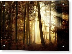 A New Day Acrylic Print by Norbert Maier