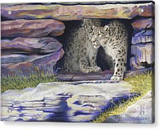 A New Day - Snow Leopards Acrylic Print by Tracy L Teeter