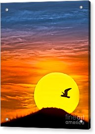 A New Day Acrylic Print by Susan Candelario