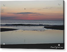 A One Seagull Sunrise Acrylic Print by Robert Banach