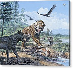 A Pack Of Canis Dirus Wolves Approach Acrylic Print by Mark Hallett