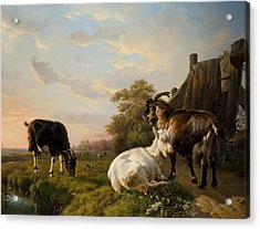 A Pack Of Goats Acrylic Print by Jacques Raymond Brascassat