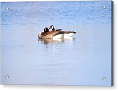 A Pair Of Geese Acrylic Print by Valarie Davis