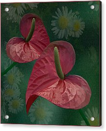Acrylic Print featuring the photograph A Pair Of Hearts by Steve Zimic