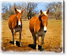 A Pair Of Mules  Digital Paint Acrylic Print by Debbie Portwood