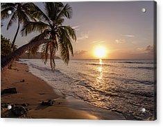 A Palm Tree Silhouette At Sunset  St Acrylic Print by Jenna Szerlag
