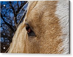 A Palomino's Eye. Acrylic Print by Doug Long