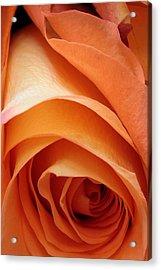 A Pareo Rose Acrylic Print by Joe Kozlowski