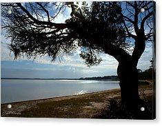 A Park With Tranquil Moments Acrylic Print by Debra Forand