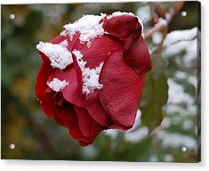 A Passing Unrequited - Rose In Winter Acrylic Print