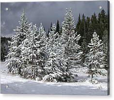 A Patch Of Sun Acrylic Print by Shane Bechler