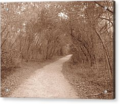 Acrylic Print featuring the photograph A Path In Life by Beth Vincent