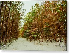 A Path In Winter  Acrylic Print