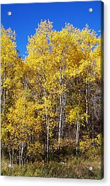 A Perfect Fall Day Acrylic Print by Sheila Byers