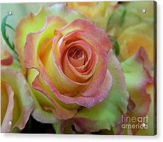 A Perfect Rose Acrylic Print by Renee Trenholm