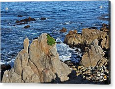 A Plant Grows On Ancient Seaside Rocks Acrylic Print by Susan Wiedmann