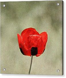 A Pop Of Red And Black Acrylic Print by Kim Hojnacki