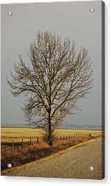 A Poplar Tree By The Side Of A Gravel Acrylic Print by Roberta Murray