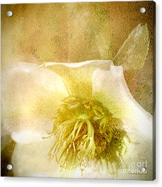 Acrylic Print featuring the photograph A Prayer by Chris Armytage