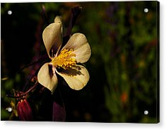 A Pretty Flower In The Sun Acrylic Print by Jeff Swan