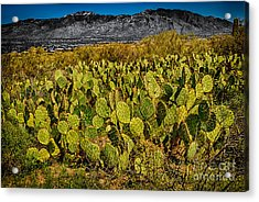 Acrylic Print featuring the photograph A Prickly Pear View by Mark Myhaver