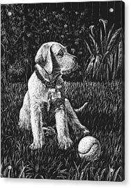 A Puppy With The Ball Acrylic Print by Irina Sztukowski