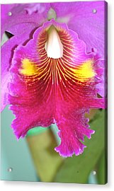 Acrylic Print featuring the photograph A Purple Cattelaya  Orchid by Lehua Pekelo-Stearns
