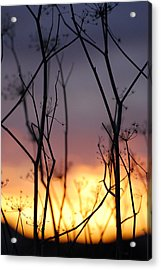 Acrylic Print featuring the photograph A Queen's Sunset by Jani Freimann