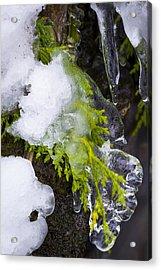 A Quick Freeze Acrylic Print