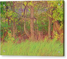 A Quiet Place Acrylic Print by Shirley Moravec