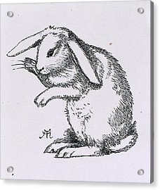 A Rabbit Acrylic Print by British Library