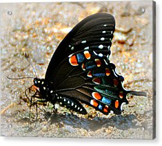 A Real Beauty Acrylic Print by Marty Koch