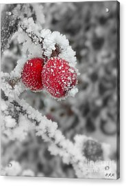 A Red Pair  Acrylic Print