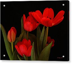 A Red Tulip Day Acrylic Print by Roena King