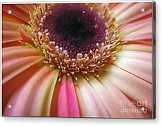 A Reminder Of Spring Acrylic Print by Chris Anderson