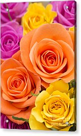 A Riot Of Roses Acrylic Print by Anne Gilbert