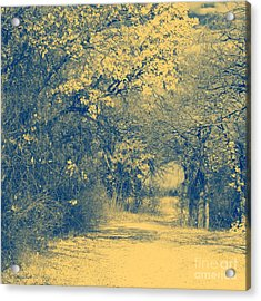 A Road Framed With Trees Acrylic Print by Mickey Harkins