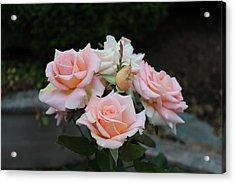 A Rose Bouquet Acrylic Print by Patricia Hiltz