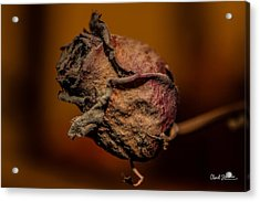 A Rose By Any Other Name... Acrylic Print by Charlie Duncan