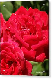 Acrylic Print featuring the photograph A Rose By Any Other Name by Dick Botkin