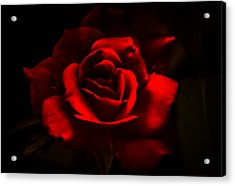 A Rose By Any Other Name Acrylic Print