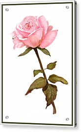 A Rose For My Love Acrylic Print