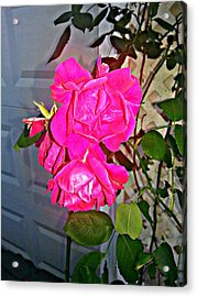 A Rose From The Garden Of Love Acrylic Print