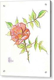 A Rose In Brigadoon Acrylic Print by Kip DeVore
