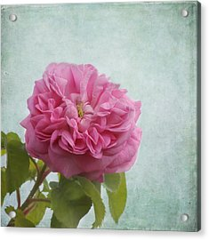 A Rose Acrylic Print by Kim Hojnacki